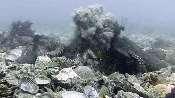 Shocking Video of octopus