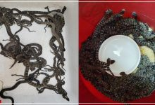 92 rattles snakes found in woman house