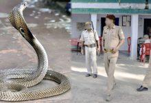 snake in police station